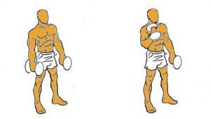 bicep alternado con mancuernas agrandar musculos bicep