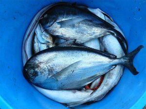 Alimentos Ricos en Vitamina B y sus beneficios Pescado