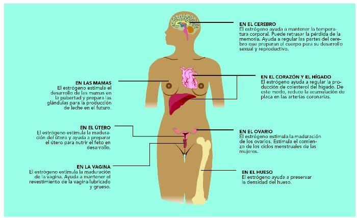 Imporancia de los estrógenos en las mujeres