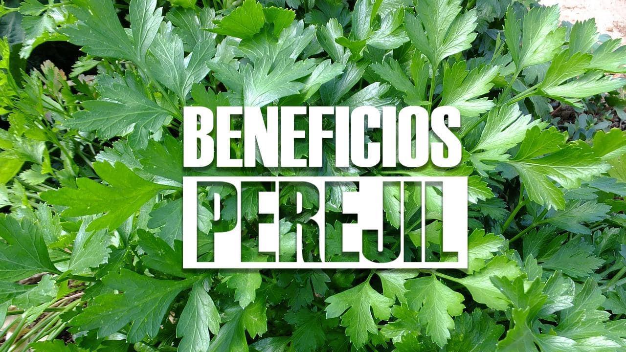 Te verde y sus beneficios para adelgazar