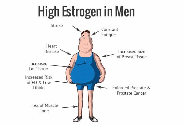 Altos niveles de Estrogeno en hombres son perjudiciales
