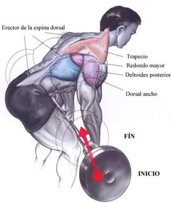 Remo con barra | Ejercicios para la espalda