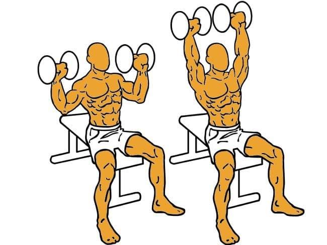 Press sentado con mancuernas | Ejercicios para hombros