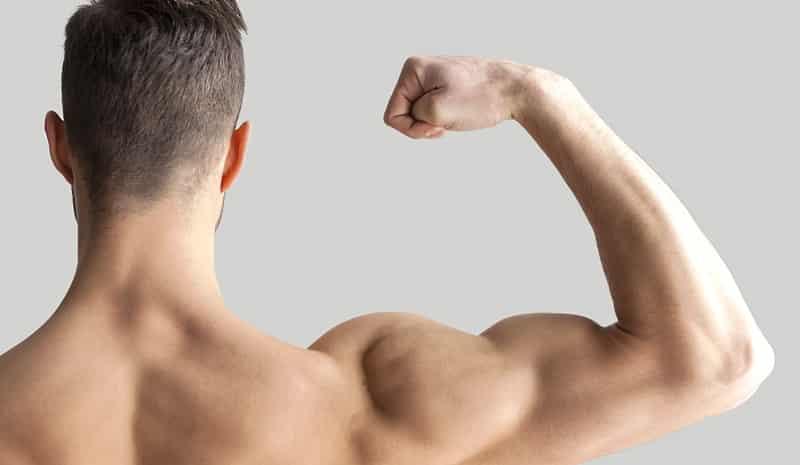3.- Alto contenido de proteínas