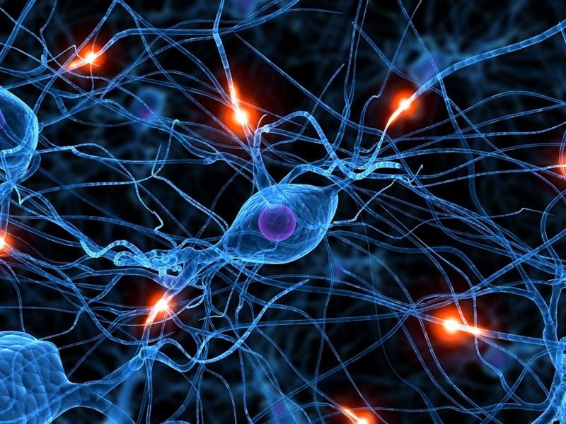 3.- Mejora la transmisión de los impulsos nerviosos