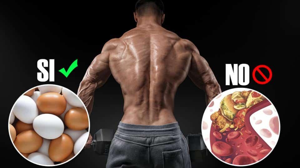 Alimentos para aumentar masa muscular
