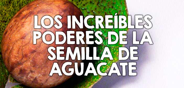 Conoce las propiedades de la semilla de aguacate