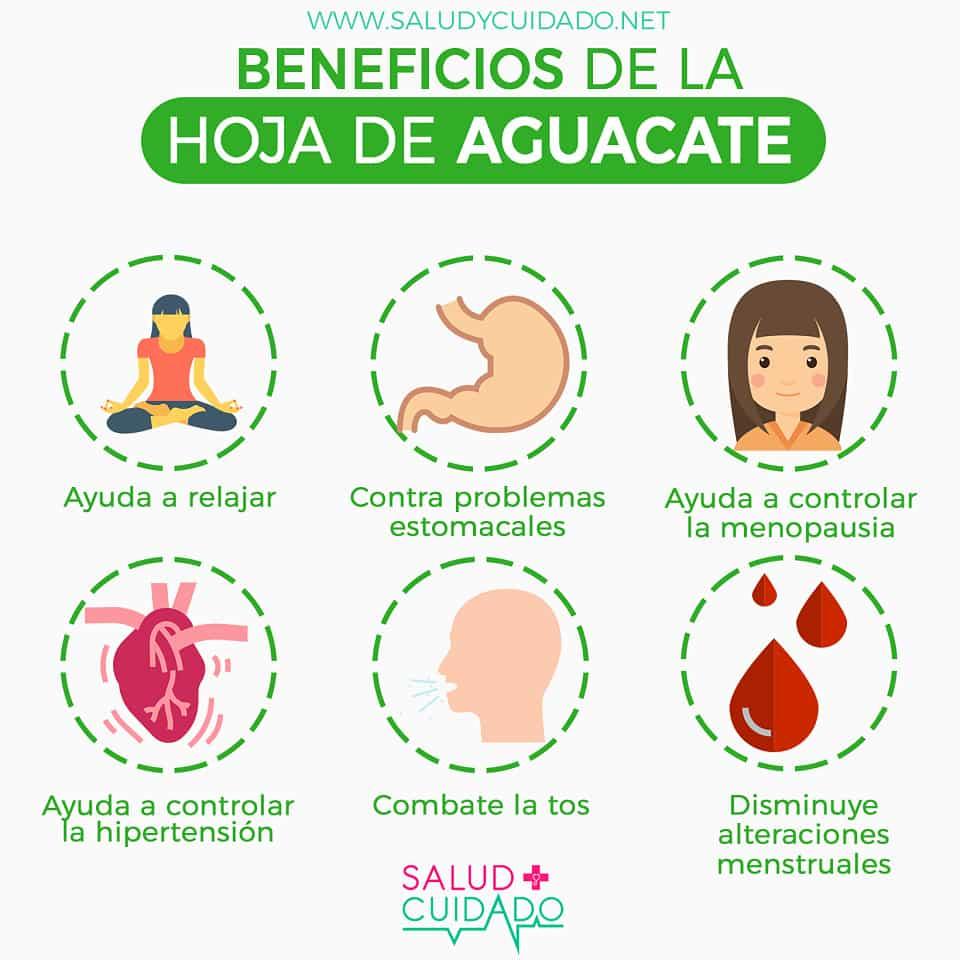 HOJA DE AGUACATE Beneficios