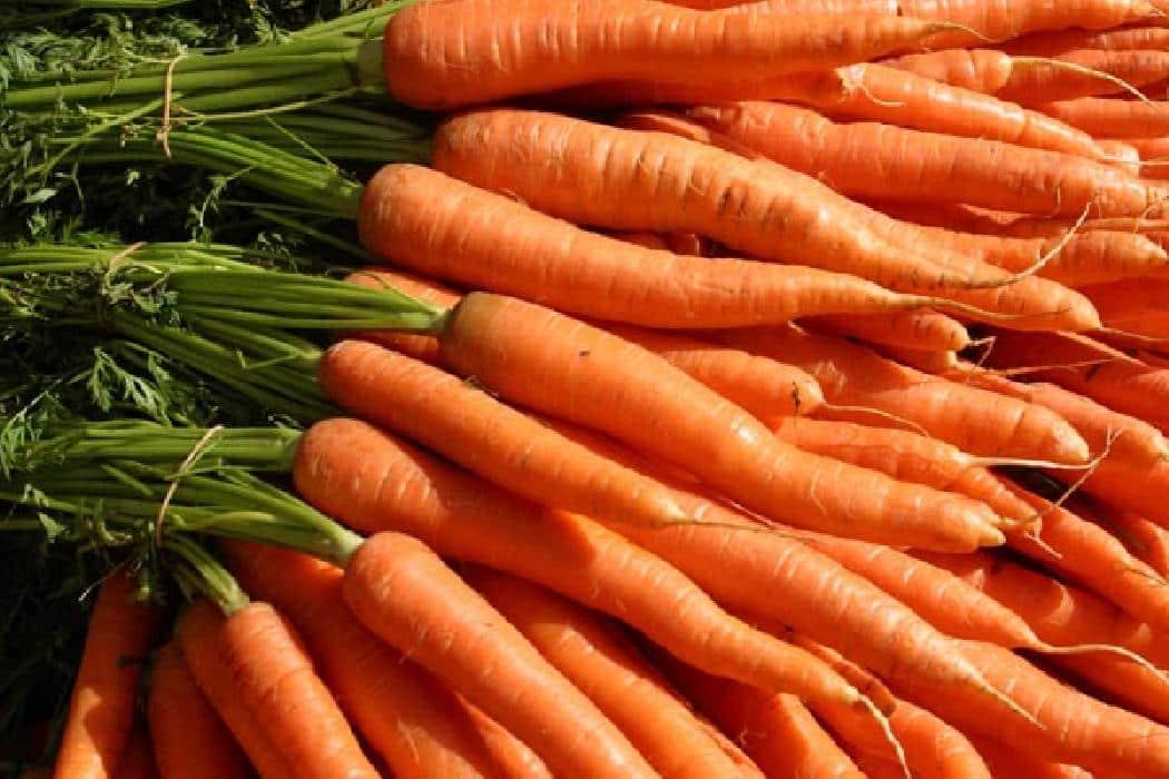 Zanahoria lo mejor para la gastritis