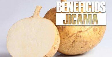 beneficios de la JICAMA