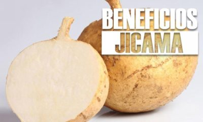 beneficios de la JICAMA