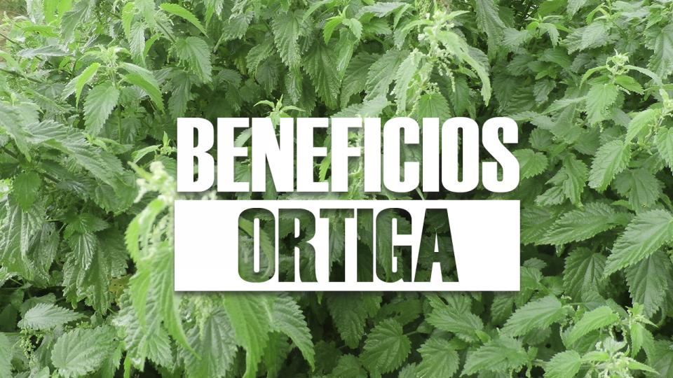 beneficios de la ORTIGA