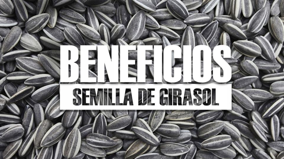 beneficios de la SEMILLA DE GIRASOL