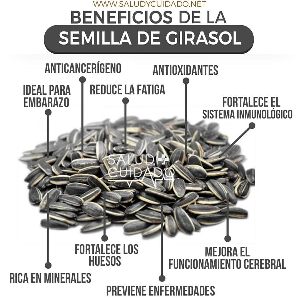 SEMILLA DE GIRASOL Beneficios y Propiedades ¿Para qué sirve?