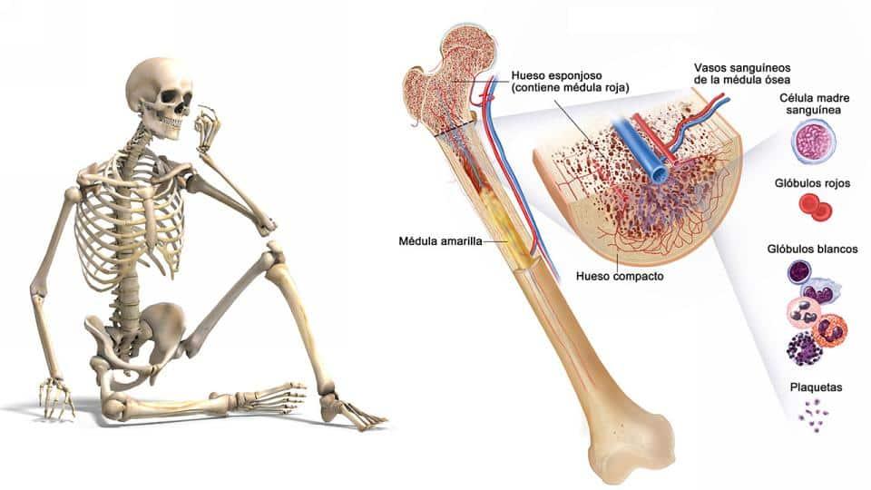 Cuidado con estas enfermedades de los huesos más comunes