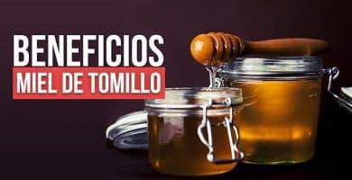 Propiedades de la miel de tomillo