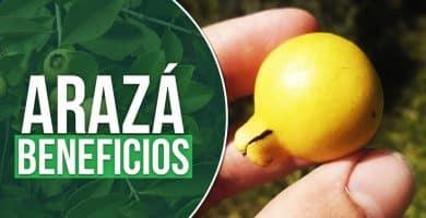 propiedades del arazá