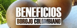 BENEFICIOS del borojo colombiano_opt