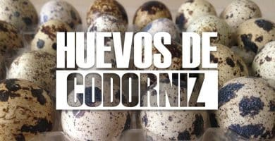 para qué sirve el huevo de codorniz