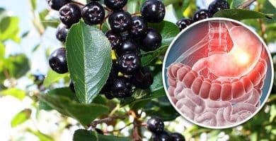 propiedades del maqui berry