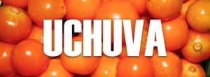 beneficios de la UCHUVA ¿Para qué sirve la uchuva?