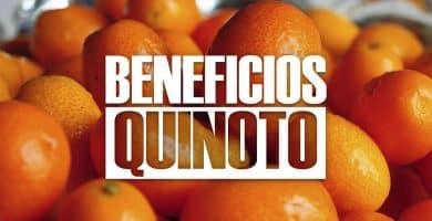beneficios del quinoto