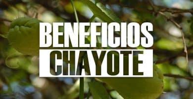 beneficios del chayote
