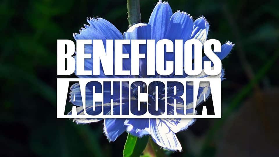 BENEFICIOS Y PROPIEDADES DE LA ACHICORIA PARA LA SALUD