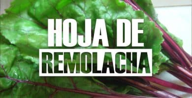 Hoja de Remolacha Beneficios, Propiedades, Recetas y Jugos