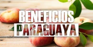 Propiedades de la paraguaya ¿Para qué sirve y cuáles son sus Beneficios?