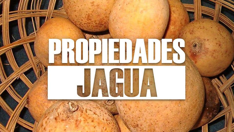 Propiedades de la jagua ¿Qué es y para qué sirve?