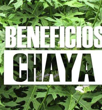 Beneficios de la chaya Planta medicinal con excelentes propiedades